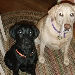 Hi, I'm Vanna, the beautiful blonde lab on the right hanging out with my good buddy, Puppy. Annapolis Dog Walkers is so cool because I get to see all of my friends when they're around. I also like long walks in the park and pawdicures.