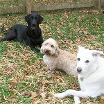 It's the gang at our playdate! We've been working on our commands with Annapolis Dog Walkers, and we're so proud of our syncronized skills. Check us out!