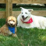 Howdy! It's Seneca and Geronimo here at our playdate. We're lookin' to lasso in some new friends....wanna play?
